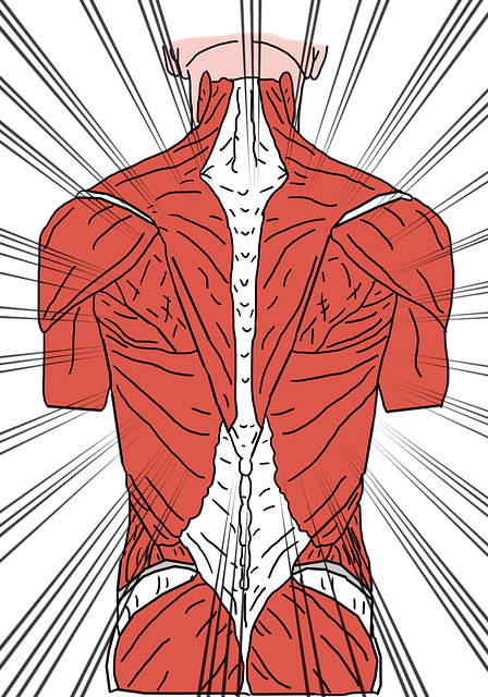Back pain san jose